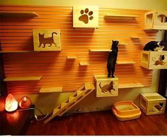 salle de jeux pour chat. Black Bedroom Furniture Sets. Home Design Ideas